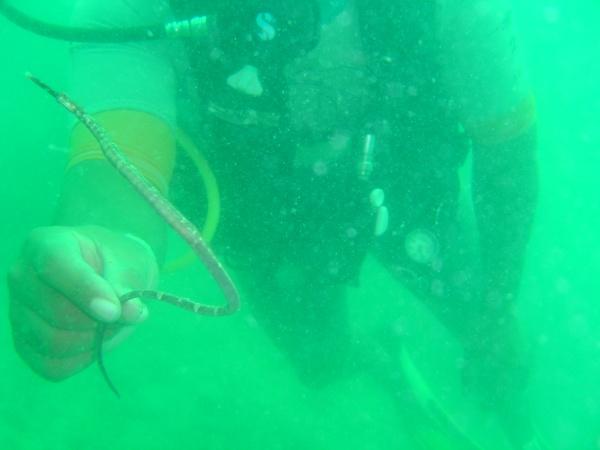 a-snake-underwater-koh-samet.jpg